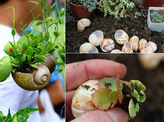 kreative dekoideen mit schnecken als mini-pflanzengefäße