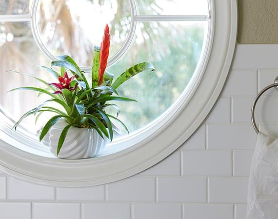 bromelie als farbakzent und fensterdeko für badezimmer_passende pflanzen fürs bad