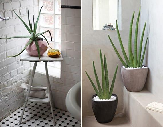 elegante badezimmergestaltung mit aloe vera_badezimmer weiß mit schwarzweißen bodenfliesen, weißer ziegelwand und freistender badewanne mit beistelltisch