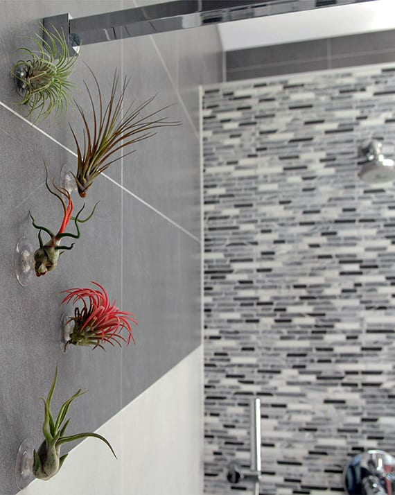 badezimmer dekorieren mit luftpflanzen und Gummisauger_kreative wandgestaltung mit Tillandsie