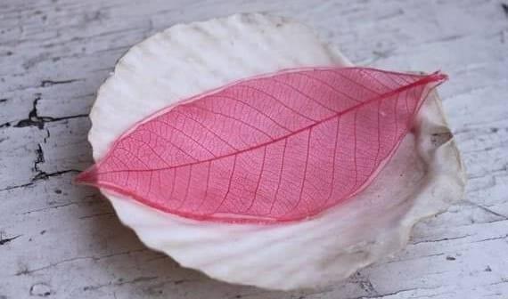 coole bastelidee für diy blatt-skelett und originelle dekoidee mit rosafarbigem blatt in Muschelschale