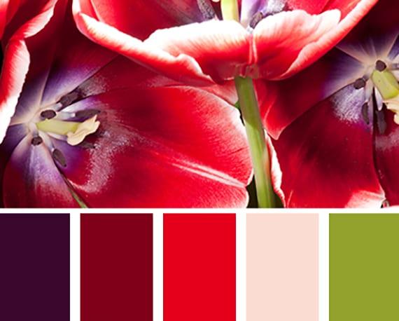 interessante farbkombination von lila, rot und grün für eine bunte farbgestaltung