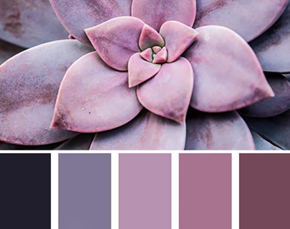 coole farbideen für wände in lila