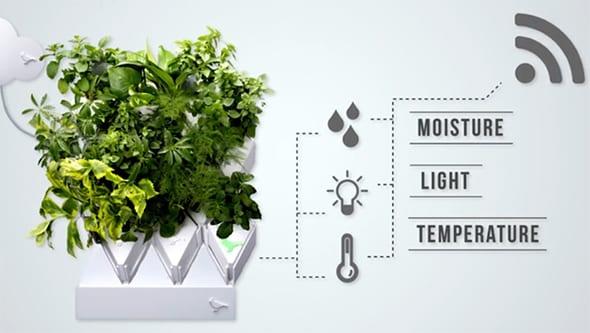 raumsparende und moderne wandgestaltung mit verschiedenen pflanzen und kräütern