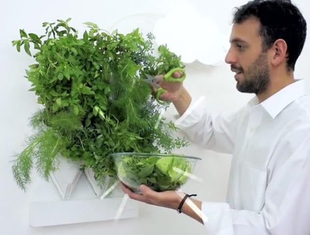 go green mit eigenem wand-kräutergarten in der küche