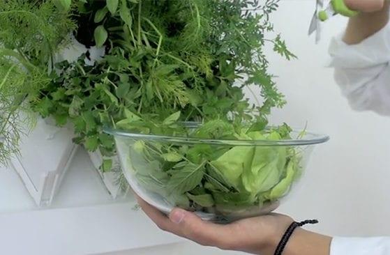 coole wohnidee für grüne Wandgestaltung Küche mit vertikalem kräutergarten