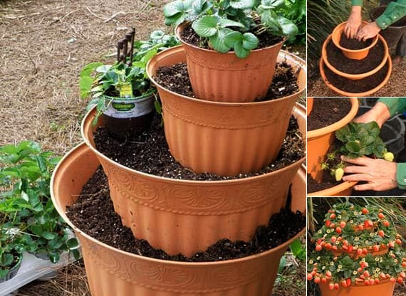 Erdbeeren pflanzen in diy containers so geht 39 s freshouse for Pflanzen ideen