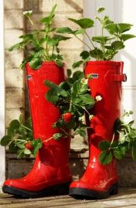 erdbeeren pflanzen in diy containers aus gummistiefeln. Black Bedroom Furniture Sets. Home Design Ideas