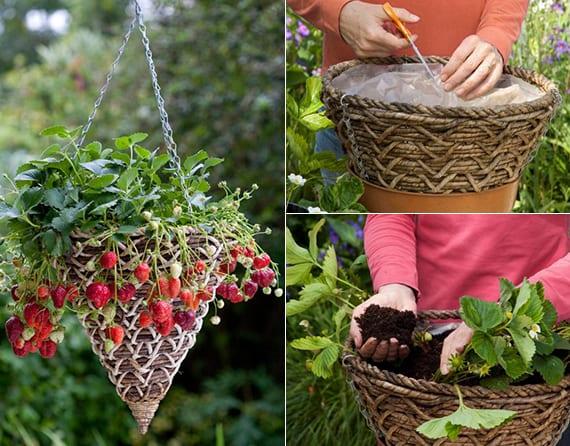 erdbeeren pflanzen in hängeampeln als coole idee zum balkon bepflanzen