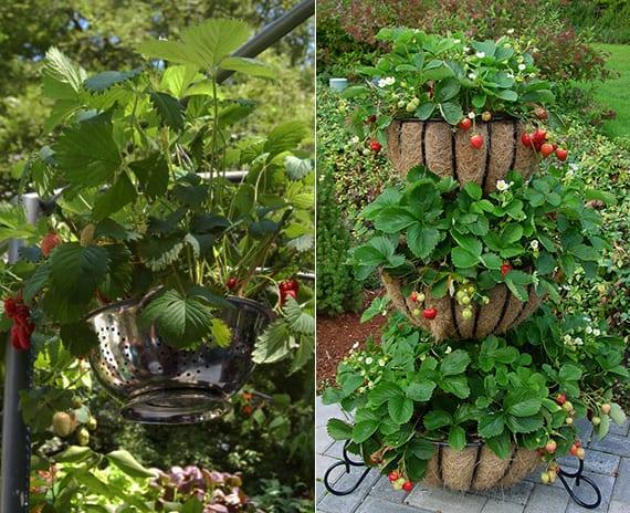 erdbeeren pflanzen in blumenkörben mit kokoseinsatz oder in diy blumentopf aus sieb