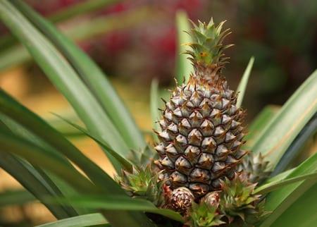 garten gestalten und bepflanzen mit passenden exotischen pflanzen