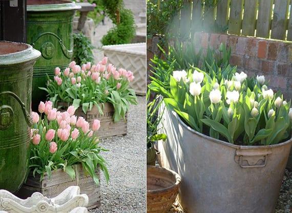 coole Frühlingsdeko im Garten mit Tulpen im Holzkisten und Metallkörben