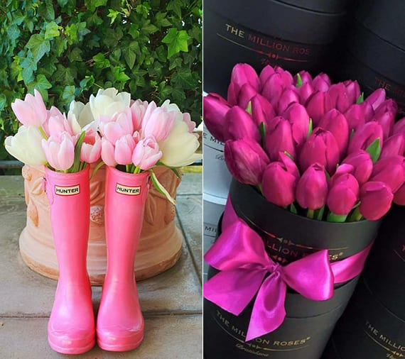 schnitt tulpen pflege