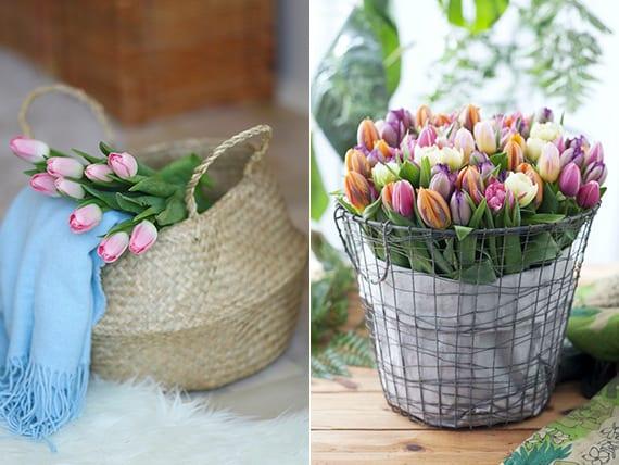 coole idee für Frühlingsdeko im Wohnzimmer mit Tulpen in weidenkorb und tullpen in drahrtgitterkorb
