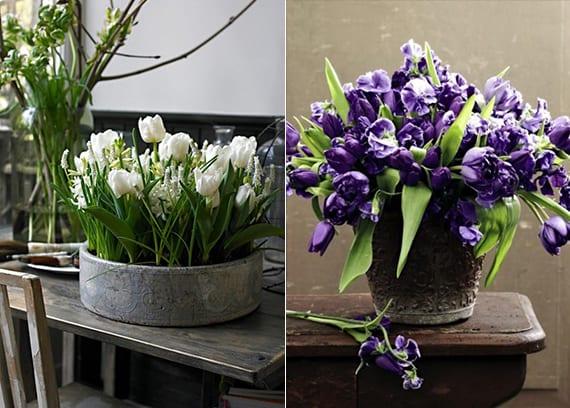 coole blumendeko ideen mit weißen und lilafarbigen tulpen in Blumentopf aus Zement