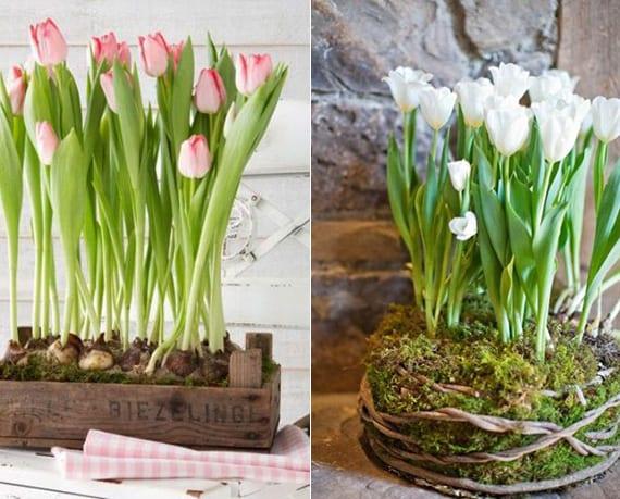 coole Frühlingsdeko mit Tulpenzwiebeln für frische wohnzimmergestaltung