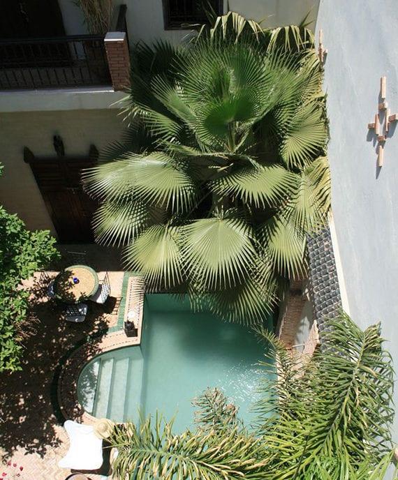 coole hofgarten gestaltung mit kleinem gartenpool und verschiedenen palmen