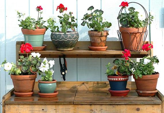 bunte gartengestaltung mit topfpflanzen in verschiedenen blumentöpfen