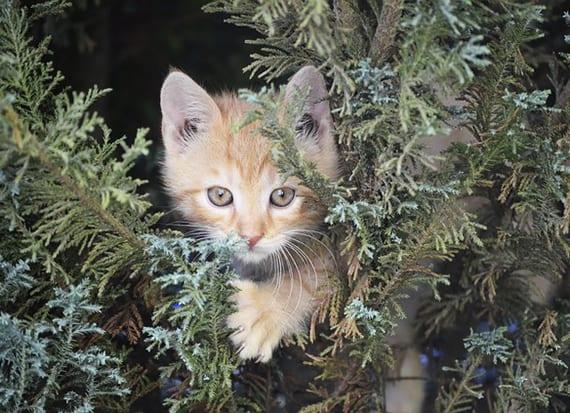 ein gesicherter Freigang für die Katze im Garten schaffen
