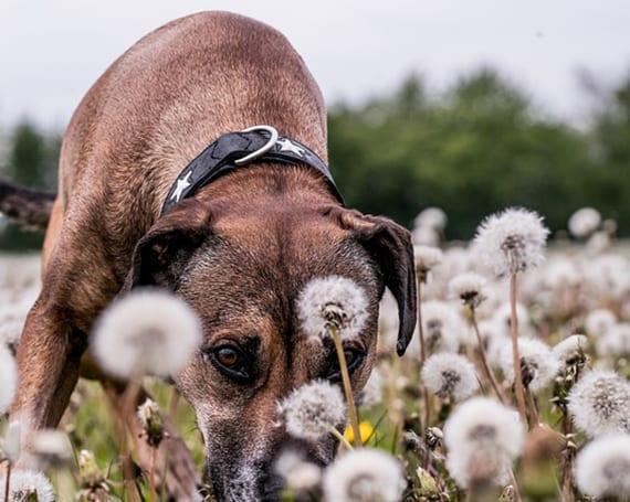 den garten für hunde sicher gestalten ohne giftige pflanzen