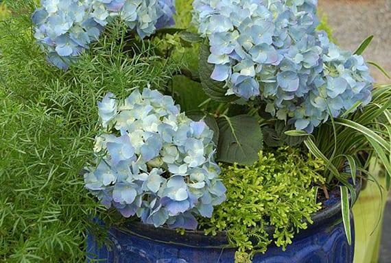 terrassendeko mit blauer hortensie und grünen pflanzen im blauen blumentopf
