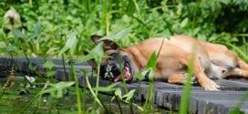 Den Garten tierfreundlich gestalten