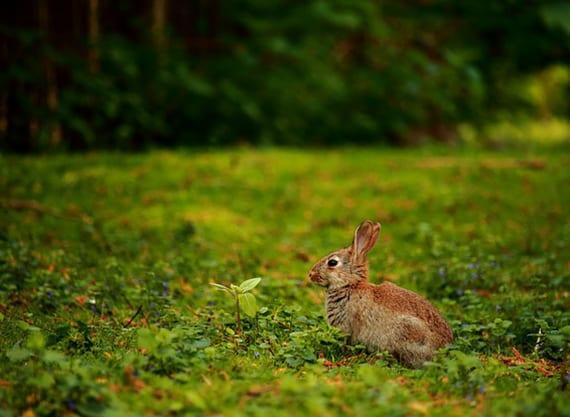 das kaninchen als haustier im garten