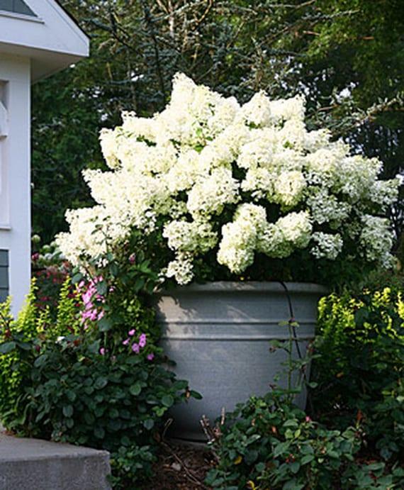 gartenideen mit hortensien als topfpflanzen