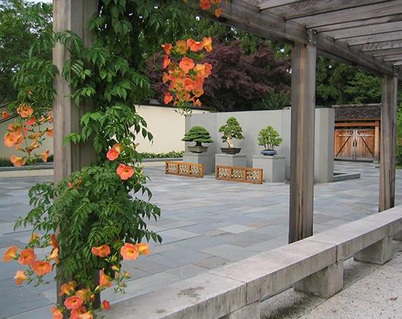 moderne gartengestaltung in japanischem Stil mit holzpergola, kletterpflanze mit orangen Blüten, sitzbänken aus stein und bonsai-bäumen