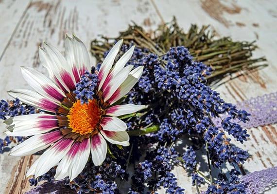 Reinigung und Desinfektion mit DIY Lavendel-Reinigungsmittel