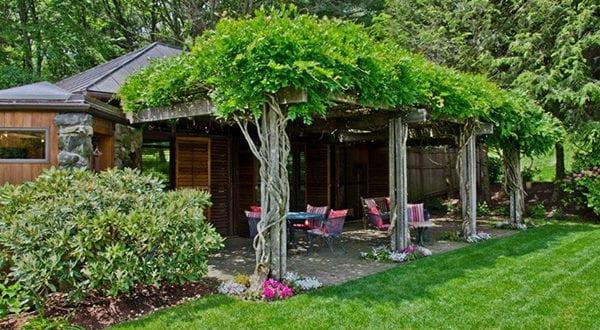 10 Kletterpflanzen für Pergola: traumhafte Sitzplätze im Garten gestalten
