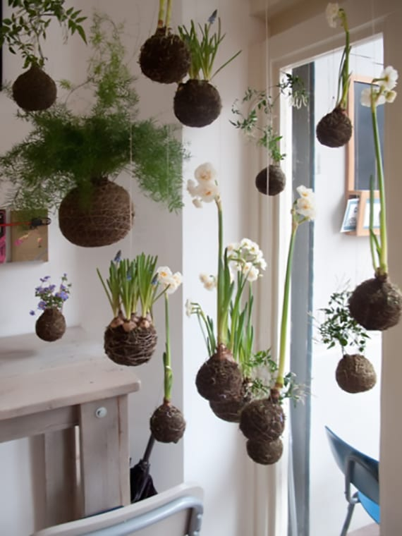 originelle Raumdekoration mit diy Kokedama_hängende Blumen in Moosbällen als coole deko für fenster