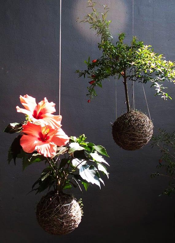 schicke raumgestaltung im japanischen Stil mit hängenden Blumen und Pflanzen in Moosbällen