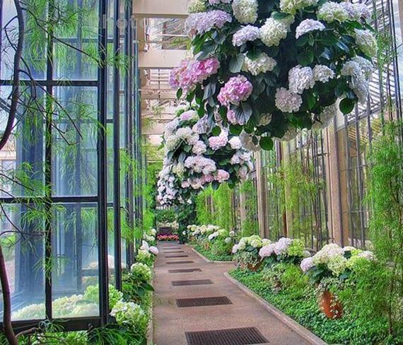 hortensie als balkonpflanze in hängebumentöpfe pflanzen für wunderschöne dekoration im hofgarten