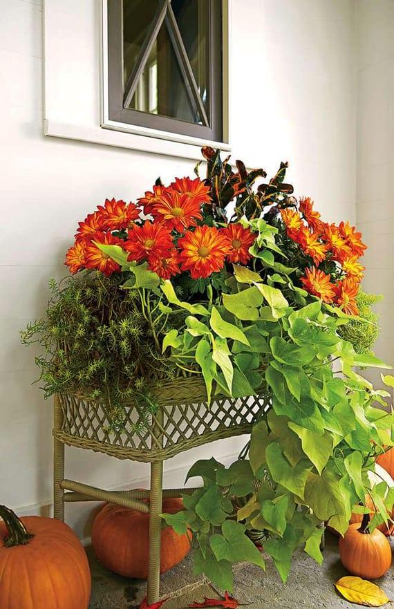 schicke herbstdekoration mit grünem Korbgeflecht-Blumenkübel, orangen Chrysanthemen, hängenden pflanzen und orangen kürbissen